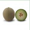 Семена дыни KS 7044 F1 фирмы Китано